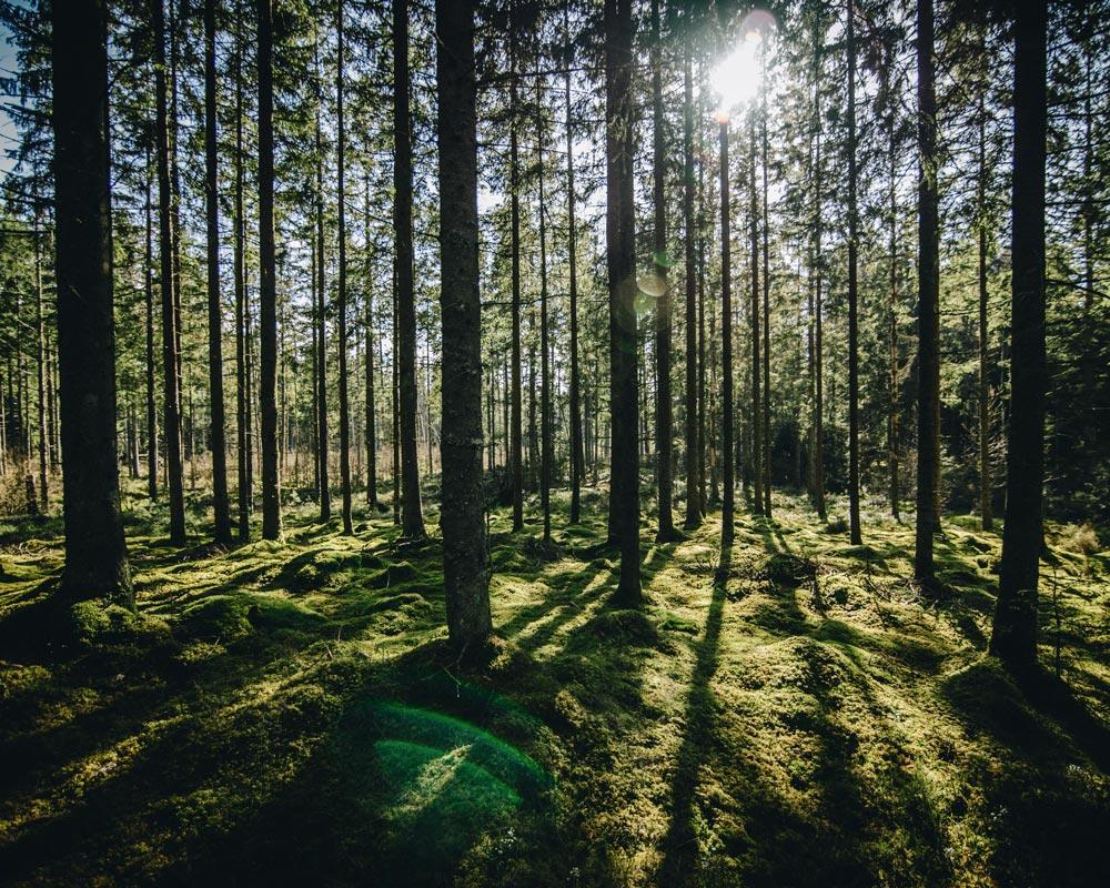 Le bois - forêt