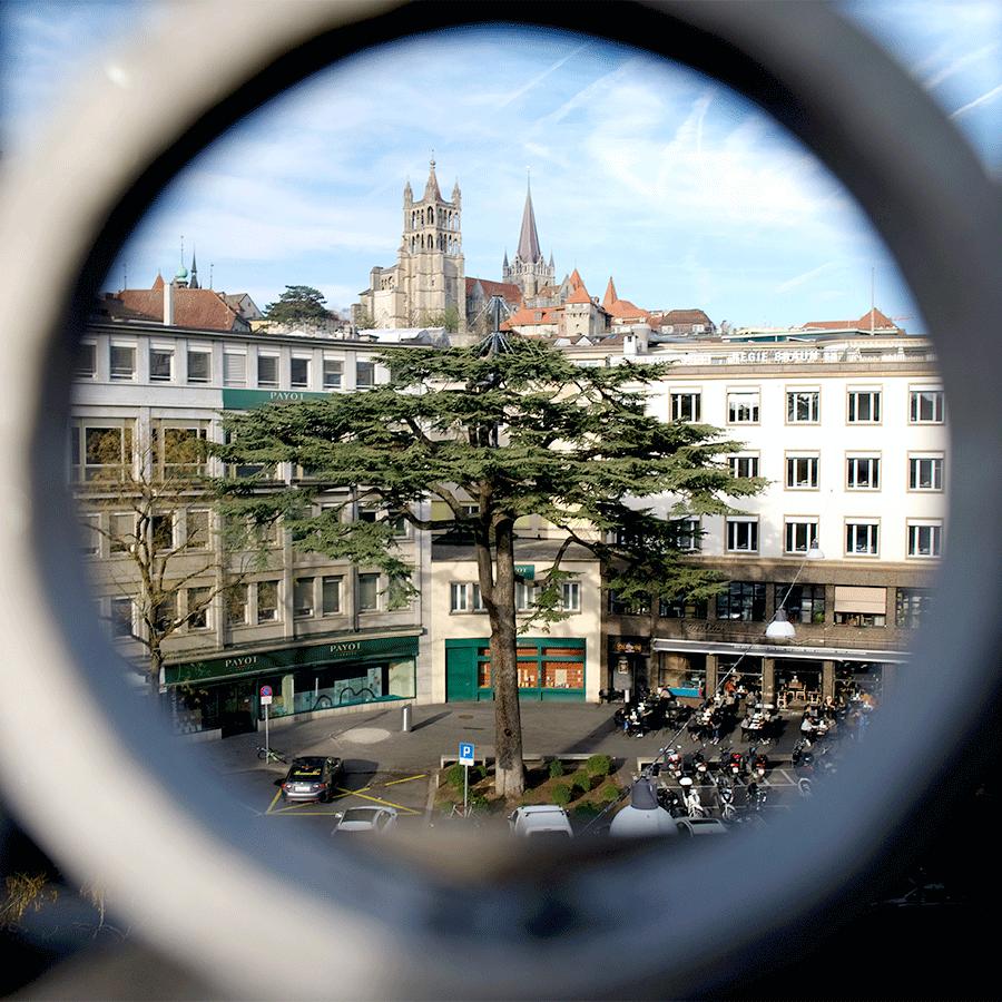Cèdre centenaire Lausanne